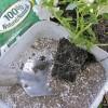 Mycorhizes pour le jardinier