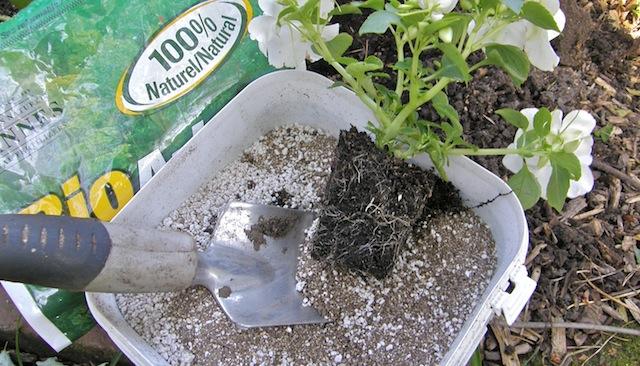 Les mycorhizes au service du jardinier ecolojardiniere for Service jardinier