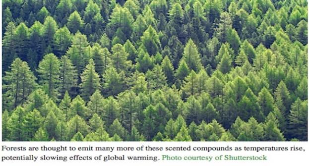 Des forêts refroidissantes
